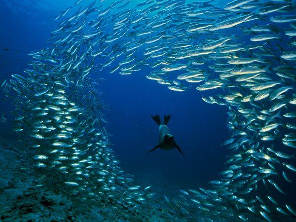 http://img.xcitefun.net/users/2010/05/174334,xcitefun-woderful-underwater-world3.jpg