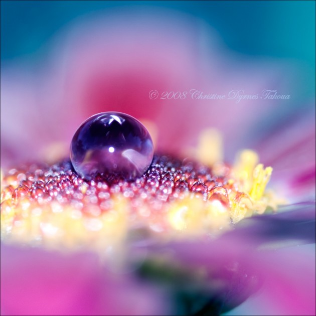 Beautiful Water Drops Macro Photography