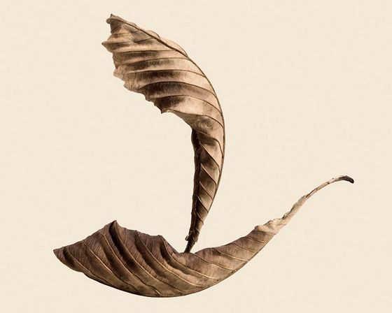 How To Draw Dry Leaf