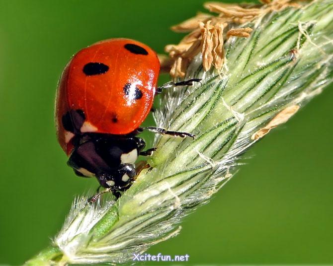 Ladybug Beautiful World - XciteFun.net