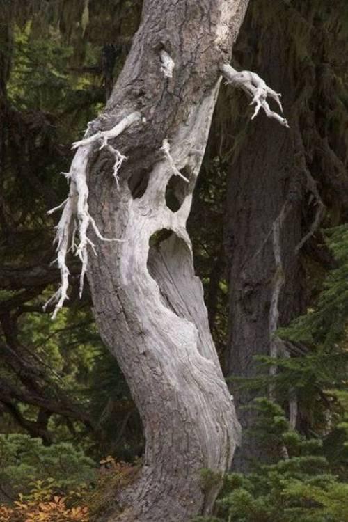 Strange Trees Xcitefun Net