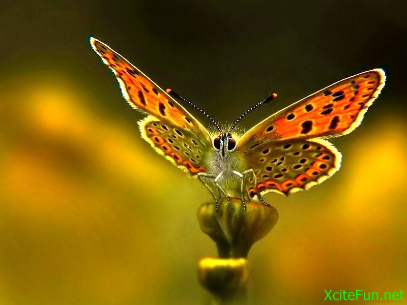 Wallpapers Beautiful Butterfly HD