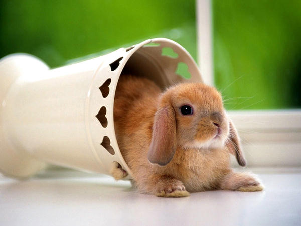 Most Beautiful Rabbits