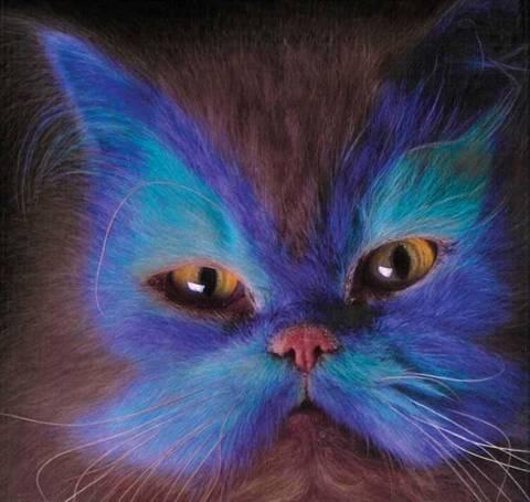Spray Painted Cats Xcitefun Net