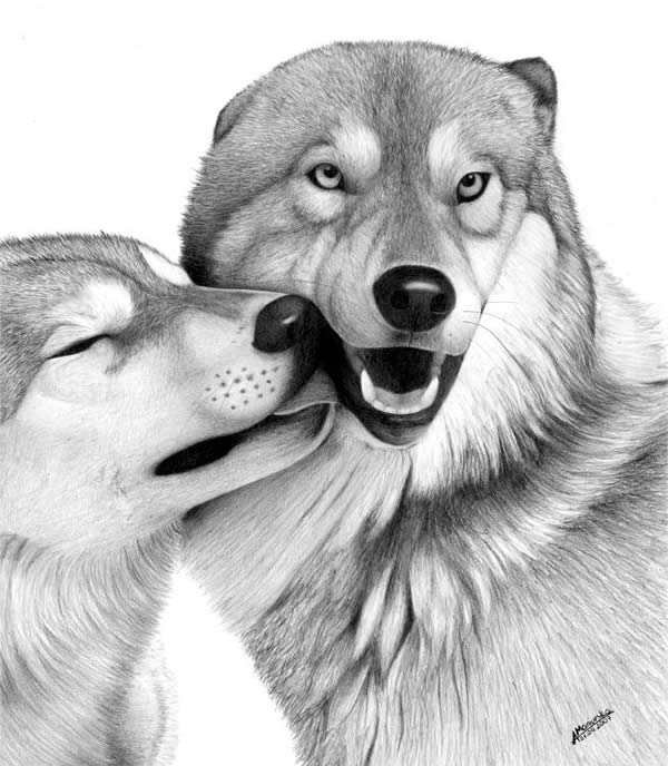 drawings sketches animals animal realistic drawing dog pencil draw cool hative lizz amazing sketch inspiration cute pets xcitefun lovely spence