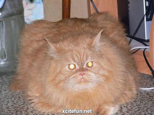 funny fat cat pictures. Fantastic Funny Fat Cats