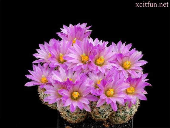 Most Beautiful Cactus Flowers