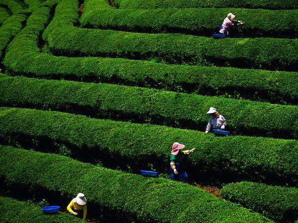 South Korea Photos