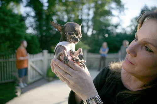 The smallest dog in the world ever