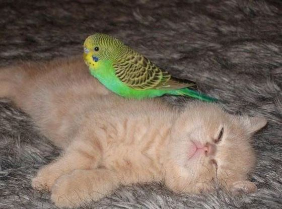 196149,xcitefun-friendship-of-cat-and-pa
