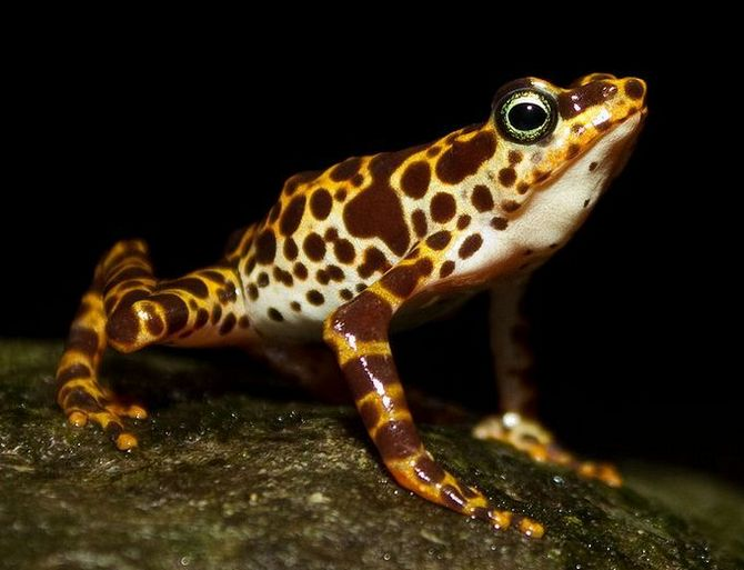 the most colorful and poisonous frogs xcitefunnet