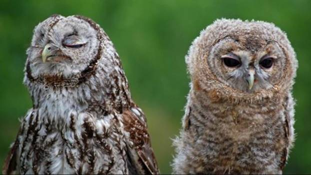 Awesome Facts About Owls