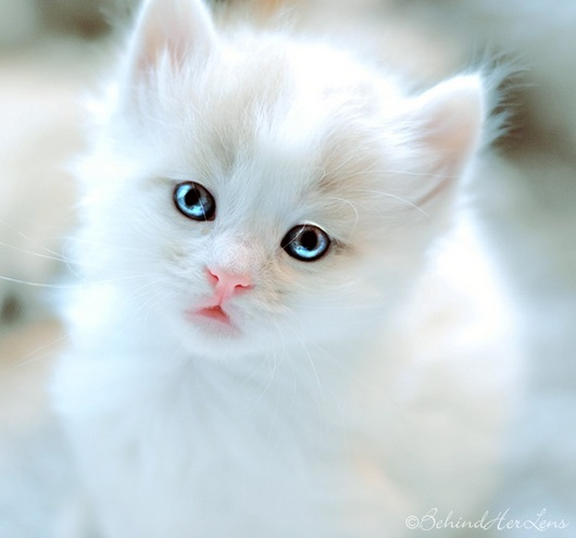 The Most Beautiful Cats Xcitefun Net