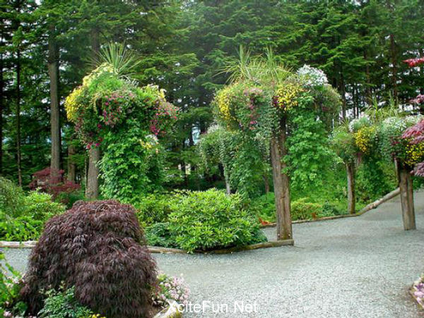 The Mendenhall Upside Hanging Garden Of Alaska