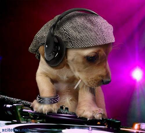 dj dog   the barking beats   xcitefun