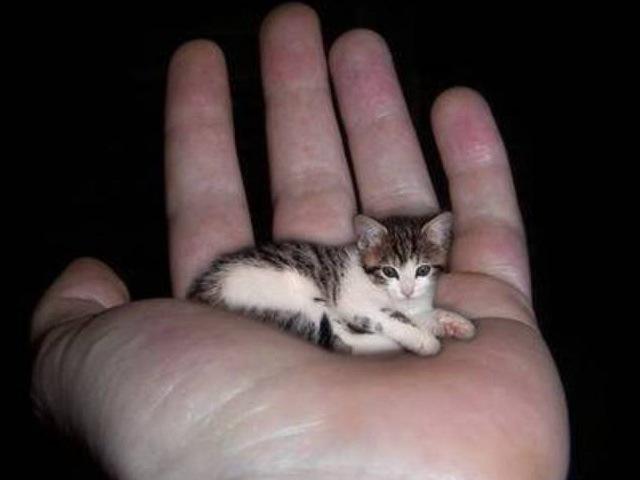 Smallest Animals In The World - XciteFun.net