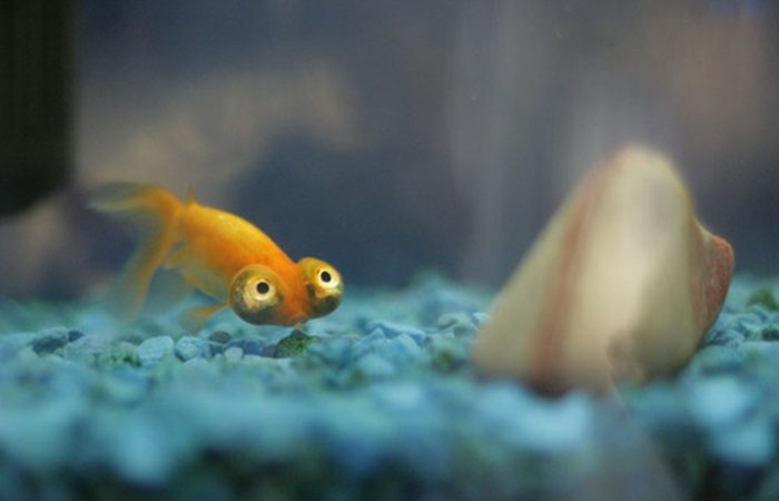 Funniest Fish In the W...