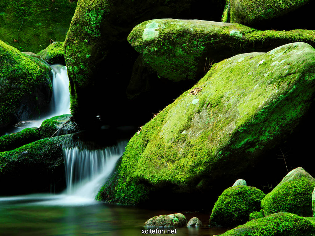 lush green nature photographic best lcd desktop