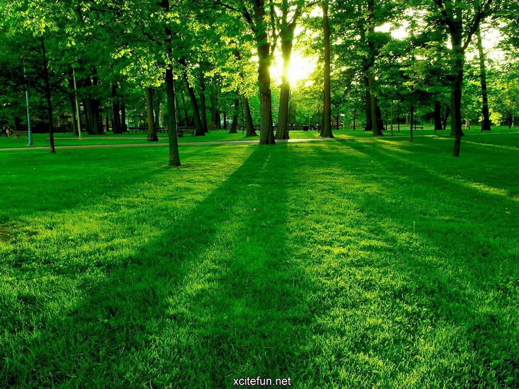 Lush Green Nature Photographic