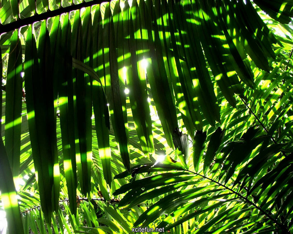 Lush green nature photographic best lcd desktop - Nature background pictures for computer ...