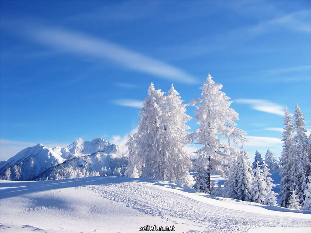 post subject winter nature photography cold nature wallpapers winter