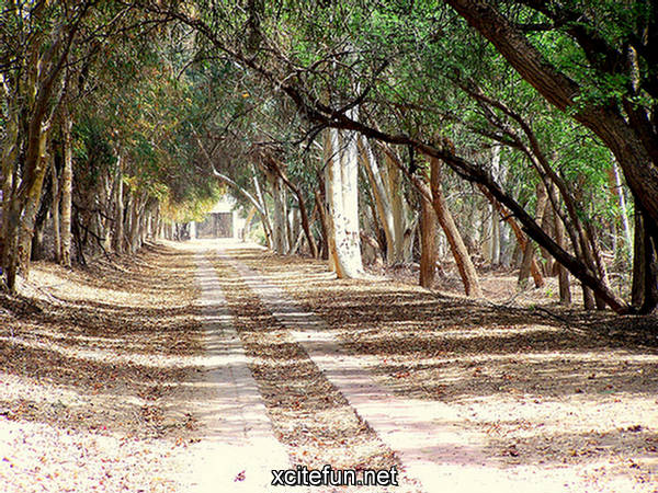 Lal Suhanra National Park Of Pakistan Xcitefun Net