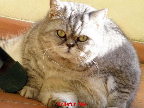 Fat Cat Software Reviews