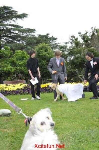 wedding pdf dog marries man