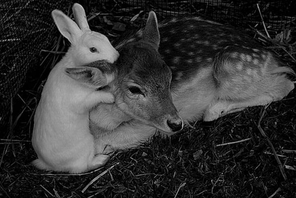 Beautiful Animals  Romantic Photos