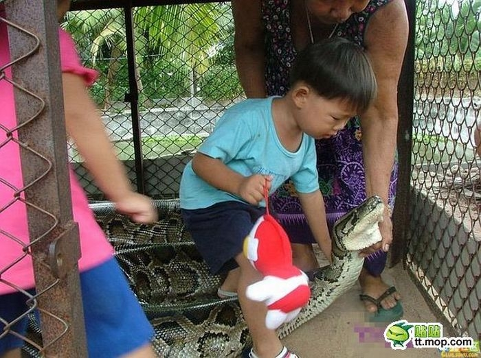 Kids Are Playing With Anaconda Snake