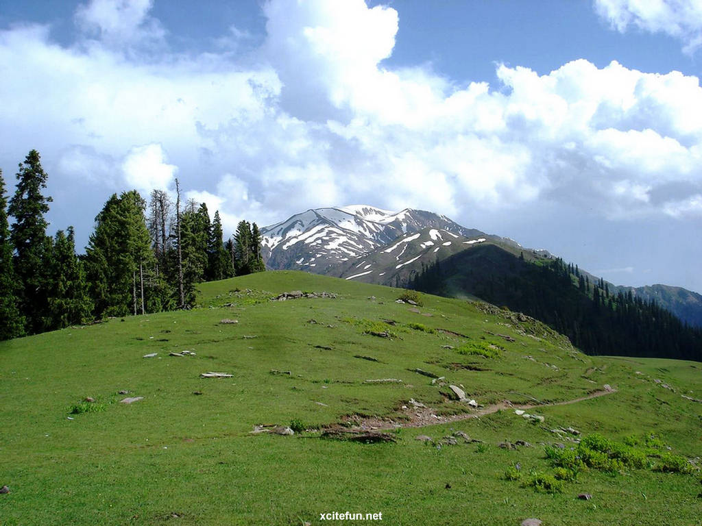 environment in pakistan The ministry of environment, local government and rural development is responsible for policy decisions on various issues concerning the environment the pakistan environment protection council .