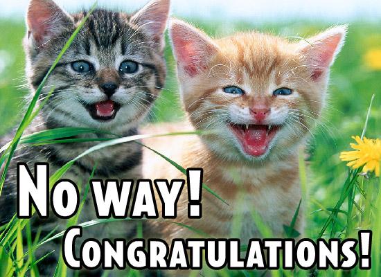 Congratulations funny dog - photo#13
