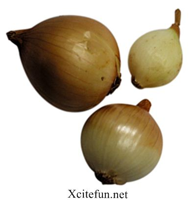 Types of Onions  A Complete Glossary
