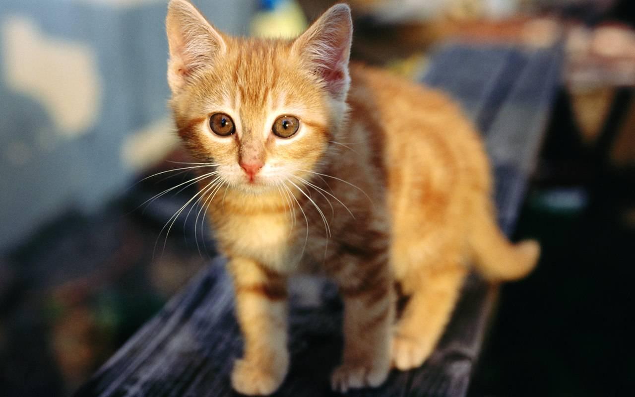 World Most Beautiful Kittens Ever....... - XciteFun.net
