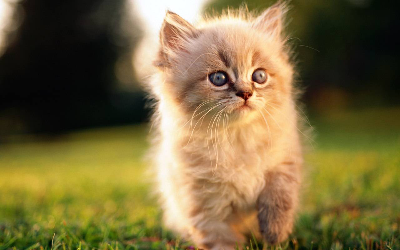 world most beautiful kittens ever