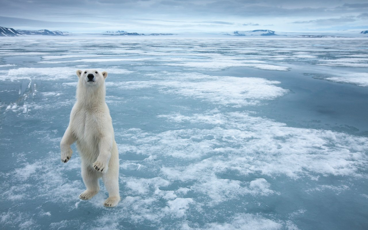 Wonderful arctic landscape for Snow bear ice fishing