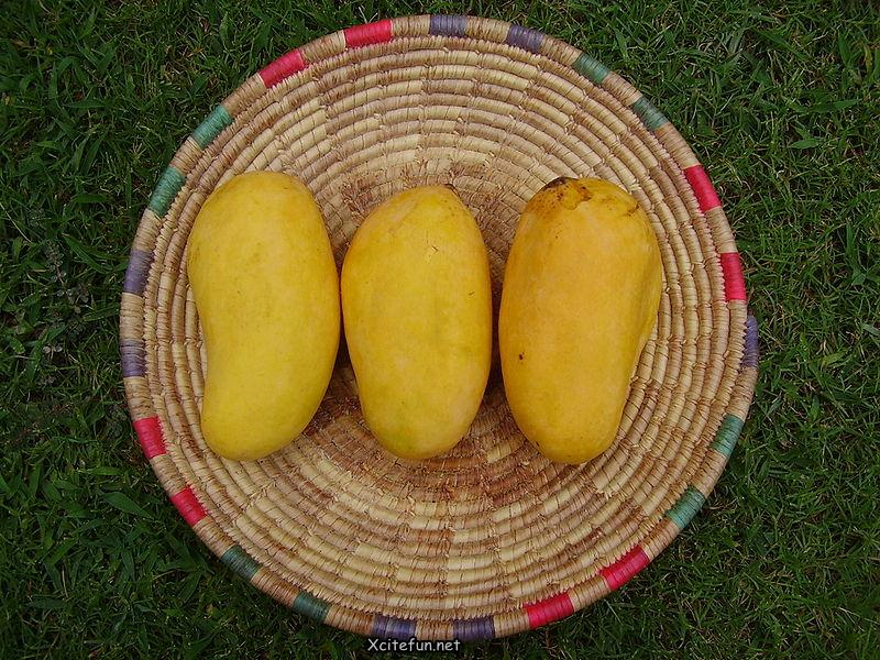Types Of Mango  King of Fruit