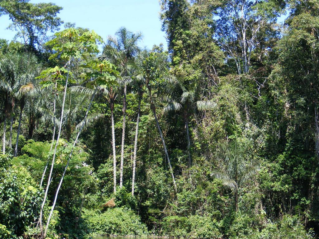 biodiversity rainforest - photo #40
