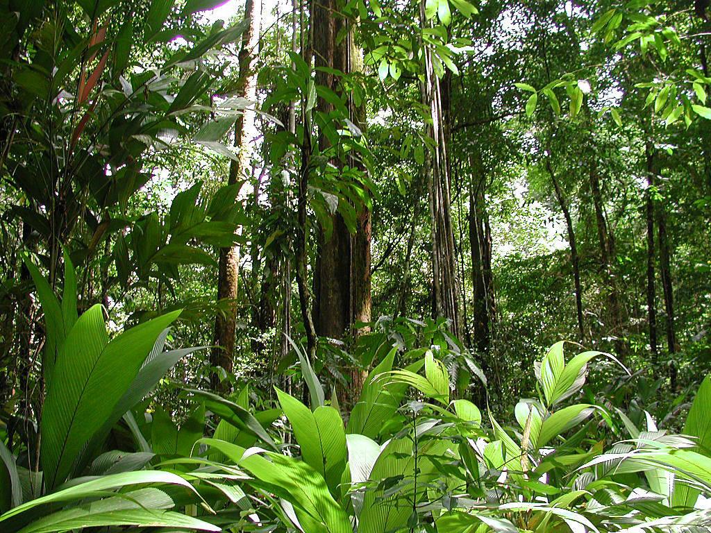 biodiversity rainforest - photo #9