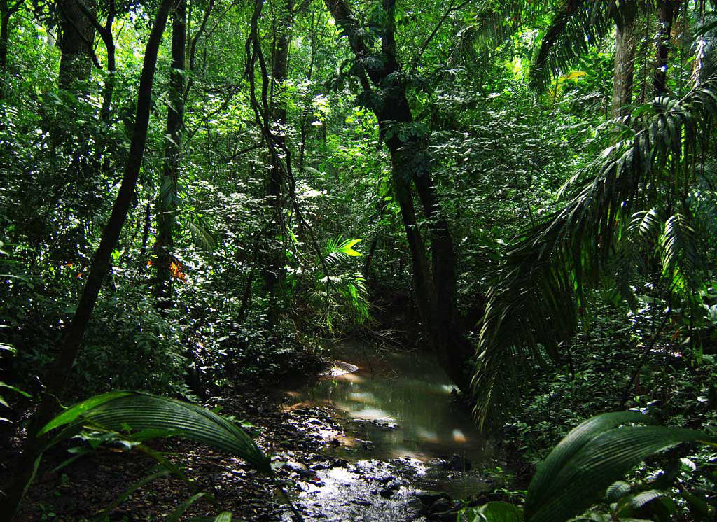 amazon rain forrest Plan the perfect trip to the amazon rainforest get a free customized itinerary catering to your exact interests & needs from ecuador & galapagos insiders.