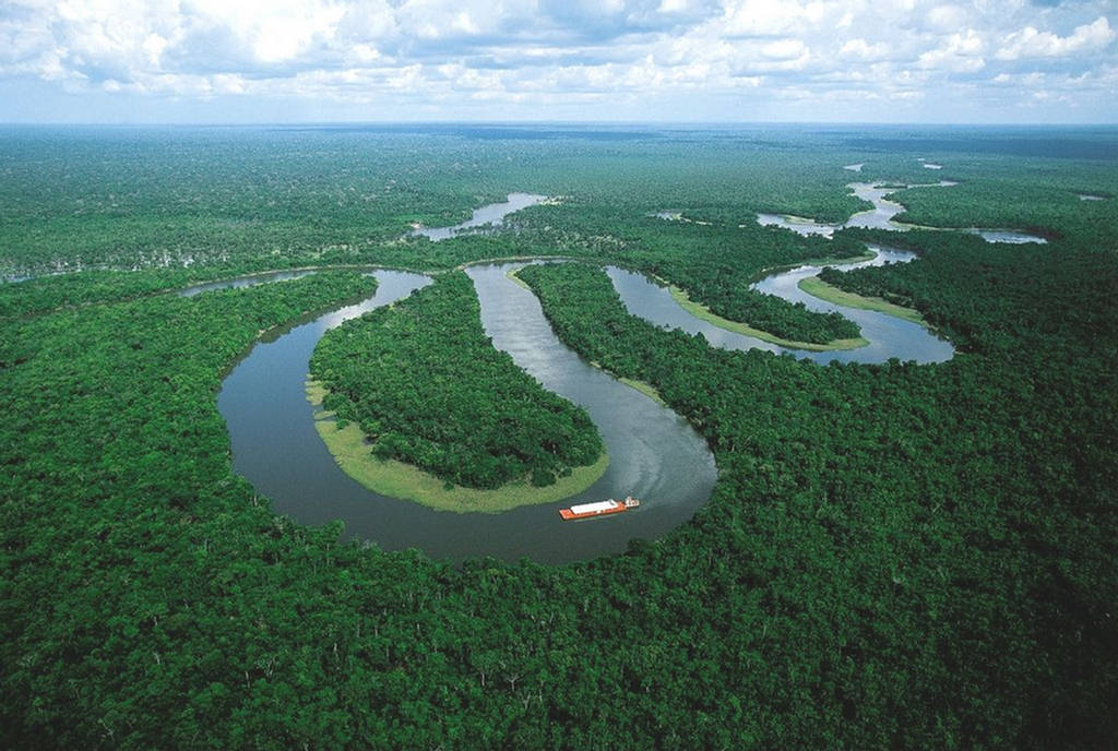 Image result for Amazon Rainforest, South America