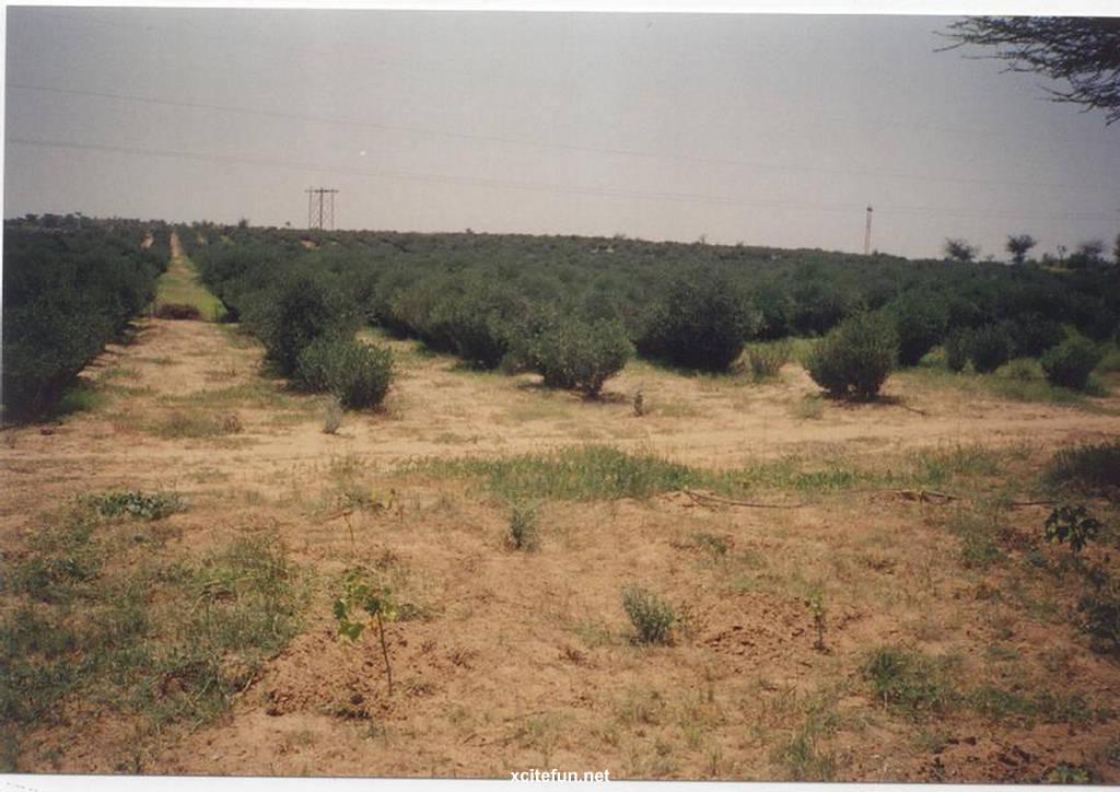 Thar desert desert between pakistan india for Soil erosion in hindi