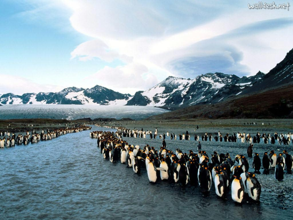 261221xcitefun king penguins at bank sunrise st andrews - Penguins Colony in Georgia