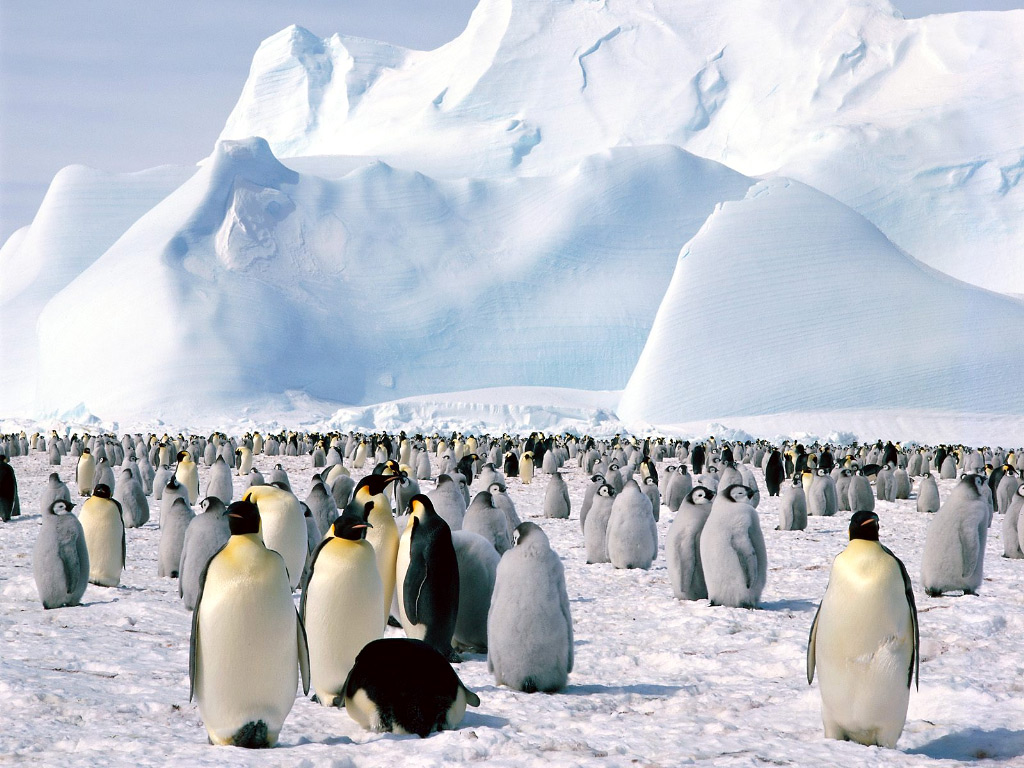 261226xcitefun antarctica - Penguins Colony in Georgia