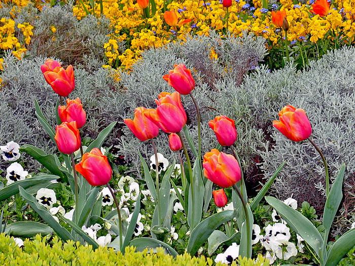 263217,xcitefun anh dep vuon hoa p1 03 Gardens with Beautiful Flowers