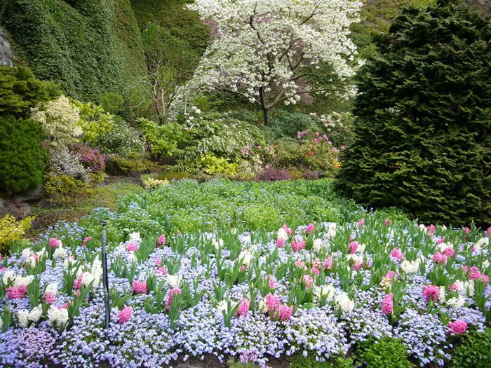 263219,xcitefun anh dep vuon hoa p1 01 Gardens with Beautiful Flowers