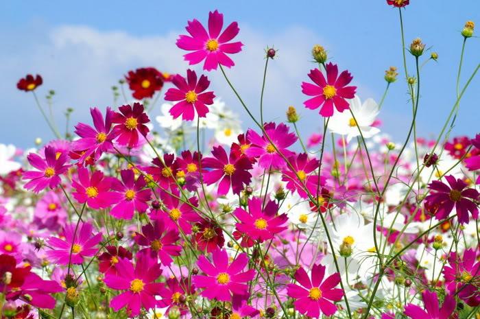 263220,xcitefun anh dep vuon hoa p1 08 Gardens with Beautiful Flowers