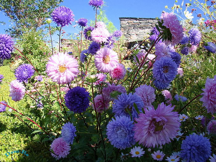 263221,xcitefun anh dep vuon hoa p1 07 Gardens with Beautiful Flowers