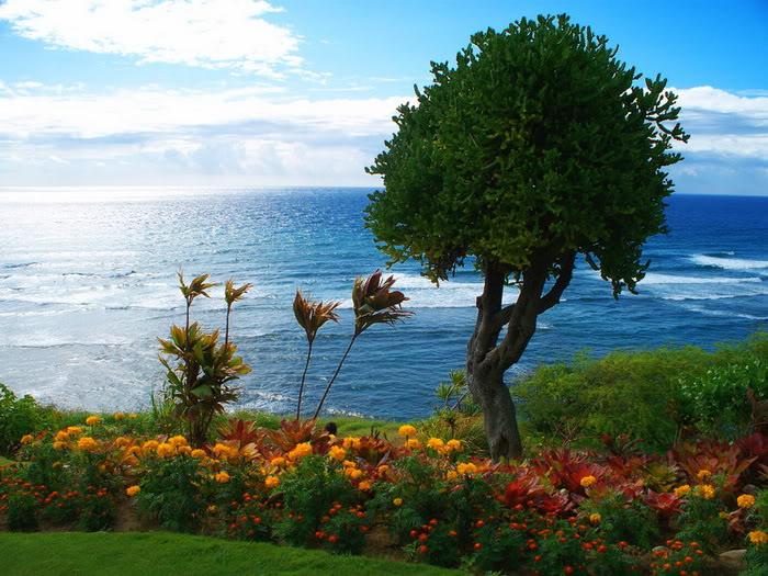 263222,xcitefun anh dep vuon hoa p1 06 Gardens with Beautiful Flowers