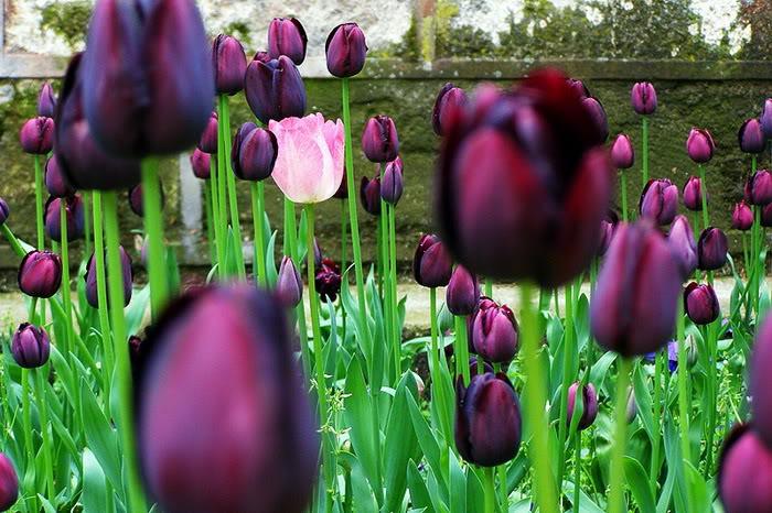 263223,xcitefun anh dep vuon hoa p1 05 Gardens with Beautiful Flowers
